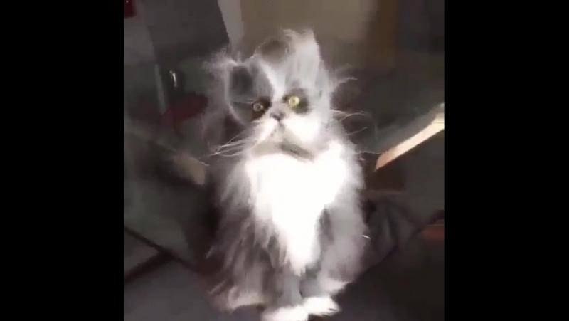 Мое обычное утро)) ешкин-кот