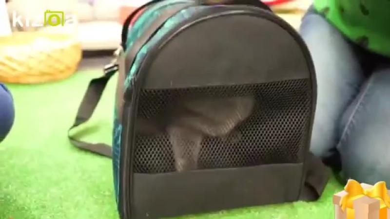58765 кошка марта в гостях у элли ди