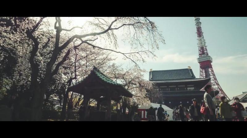 Дзодзё дзи Токио Сакура в цвету