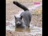 Кошка купается в луже