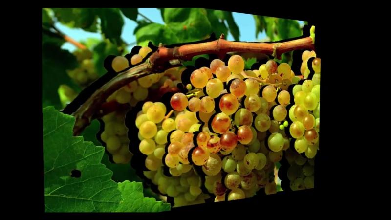 """Как написать виноград. """"Мертвый"""" слой. Глубина резкости. """"Теория одной краски"""" Часть1-я"""