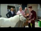 Лошадь нужна в Татарский ресторан? ? Отрывок из сериала Кухня (6 сезон 18 серия)
