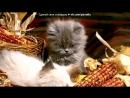 Смешные котики под музыку Максим - Мама-кошка. Picrolla