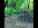 волшебный лес 😅 покатушки citycoco наскорости 😂 в Погода в городах России 11 09 2017