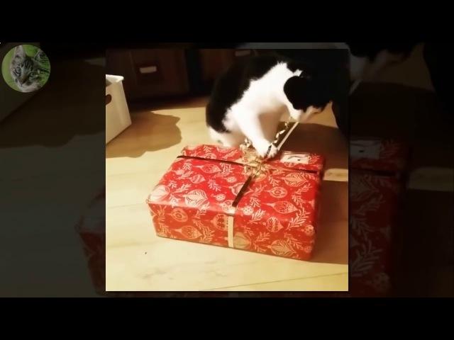Смешные кошки видео кошки которые любят подарки елки и новый год