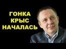 Степан Демура Гонка крыс началась