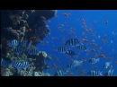 Подводный мир Красного моря. Коралловый мир Египта.