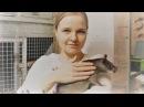 Гигантские крысы гамби