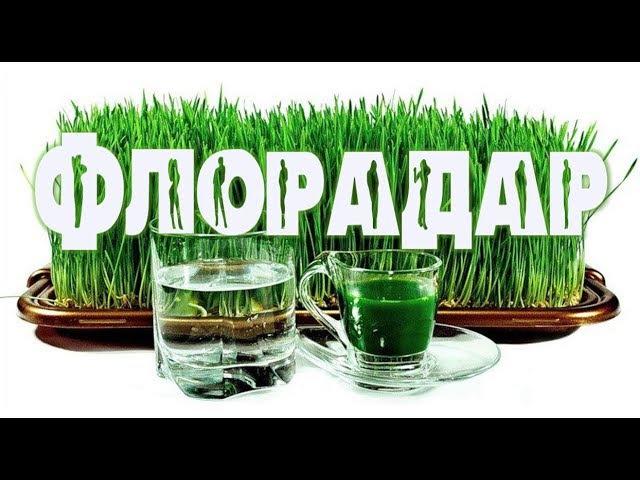 ACLON Что такое Флорадар Вебинар из СКОЛКОВО Прохорова Г 18.10.2017