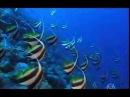 CORAL REEF (La barriera corallina in lingua italiana nel mio sito