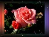 Kwiatek dla Ciebie...(