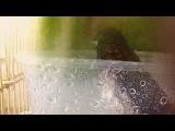 Амадины купаются ) Весёлое купание птиц ! Society Finch &amp zebra finch are bathing and swimming)))))