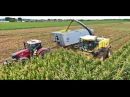 Corn silage 2017 CASE PUMA 230 CVX Siga Duo Wielton Agrofilip