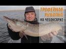 Трофейная рыбалка на Чебоксарке