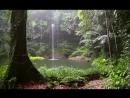 Звуки леса Пение птиц Журчание водопада и Шум дождя