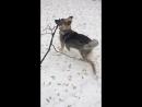 Мой любимый пёс)