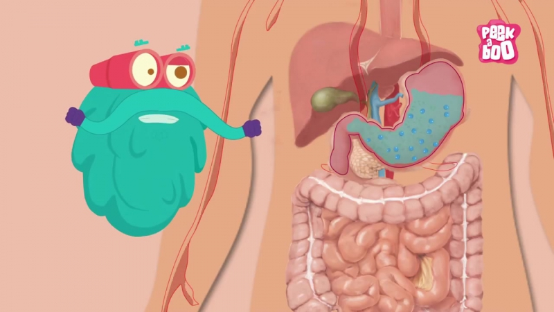 Digestive System - The Dr. Binocs Show - Learn Videos For Kids
