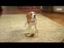 Собаки на ТНТ. Ксюша Бородина и её пёся