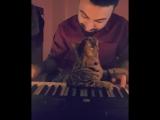 Коту очень нравится как играет на фортепиано его хозяин