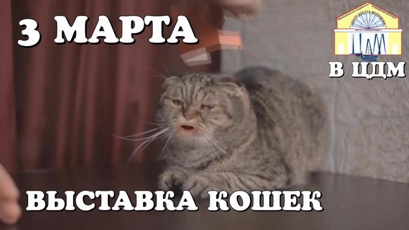 Выставка кошек в ЦДМ