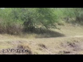 Baboons Territory VS Lion Territory - Wild Animal Attacks. #2