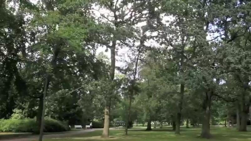 Спокойная красота парка