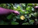 Путь Баженова-Напролом.03.Камбоджа.WEB-DL720p.Files-х