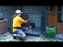 4. Приучение щенка к вольеру. Первые шаги