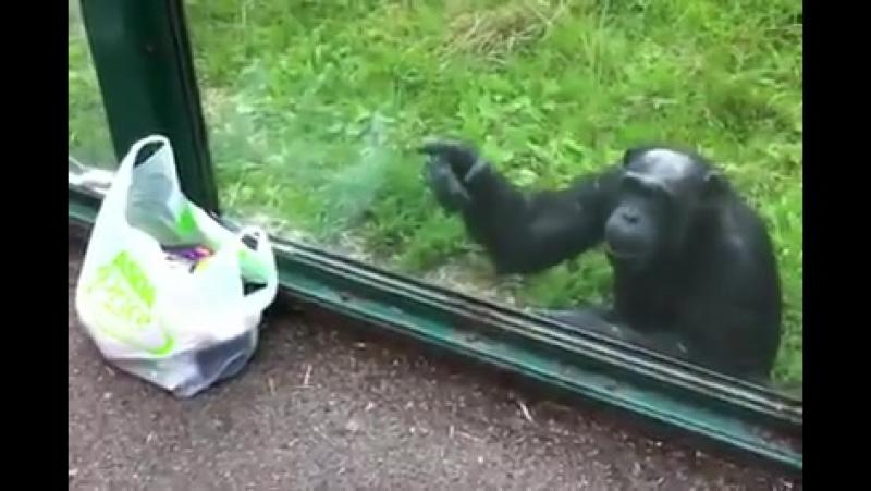 Я тетушка Чарли из Бразилии, где в лесах живет много-много диких обезьян!
