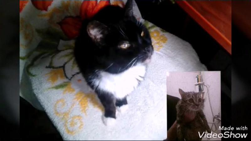 Новости про кота Томаса