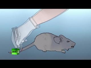 Алюминий в вакцинах, что будет с мышью если имитировать график детских прививок.