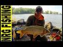 Рыбалка на КАРПА САЗАНА и ОГРОМНЫХ КАРАСЕЙ в диких условиях