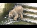 Elefantenbaby geht baden im Zoo Hannover