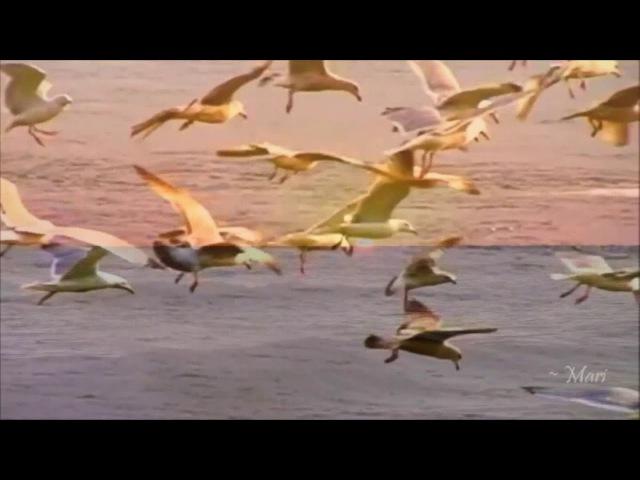 Stive Morgan ~ When No Words Are Need » Freewka.com - Смотреть онлайн в хорощем качестве
