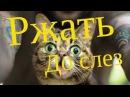 Хотите описаться от смеха - смотреть всем - видео прикол про кота. Смотреть под че...