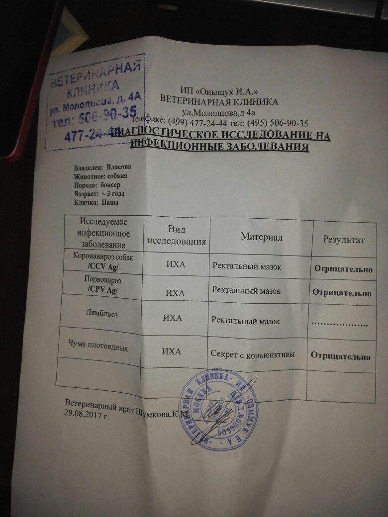 Москва, Альтан Паша', кобель, 14.08.2015 - Страница 2 JmjbK1vKPWc