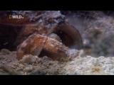 «Самые странные в мире: Чудаки в океане» (Документальный, природа, животные, 2010)