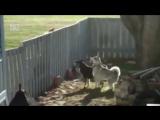 Белка троллит собак