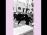 vanya_jackass.video