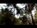 осенний парк Кузьминки