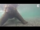 Медведь на рыбалке _raquo; Триникси