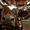 Ферма Усланка | молочные продукты из глубинки