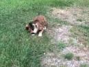 Мышки играют с кошками