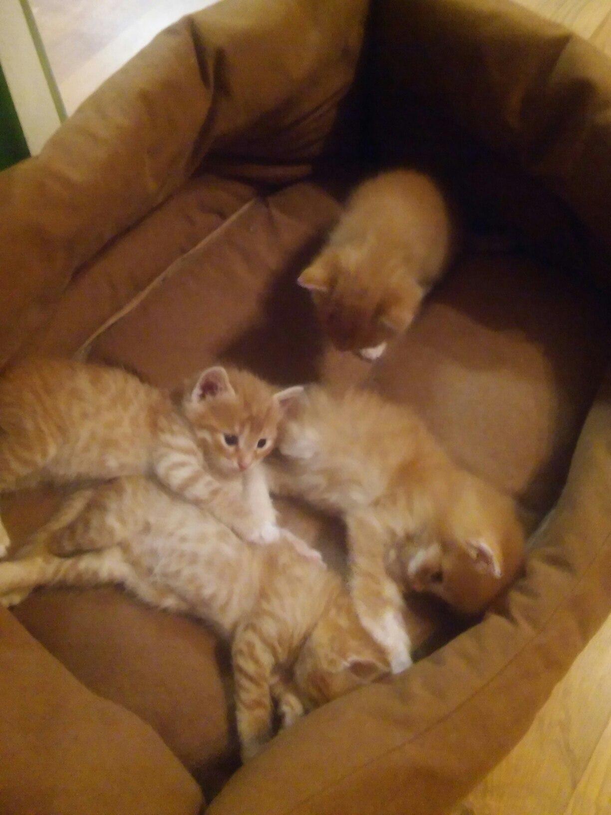 Отдадим в добрые руки милых рыженьких котят.