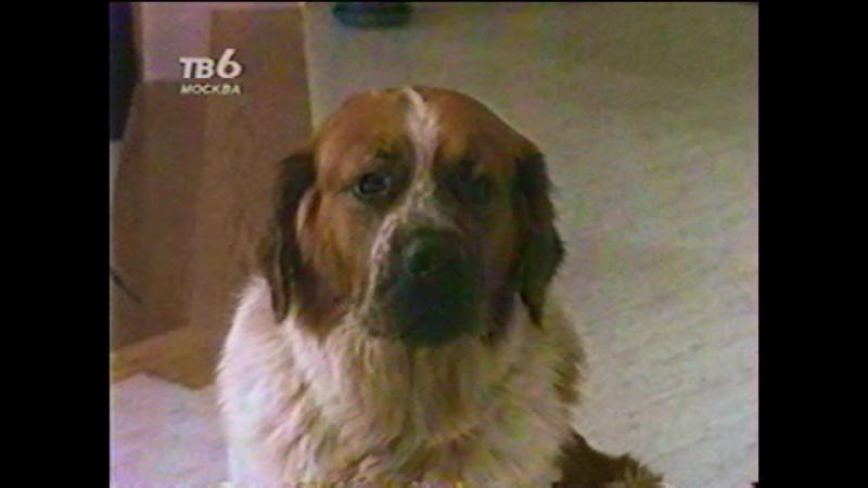 Т/С Дом собаки 10 серия (1990г)