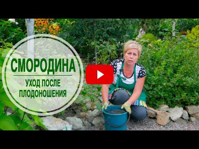 Смородина черная и красная 🌱Внесение удобрений после сбора урожая ➡ Мастер класс эксперта HitsadTV