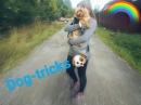 Summer dog tricks Yorkshire Terrier Thor