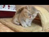 Cute Kittens Will Warm Your Heart