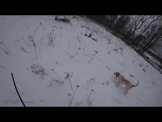 Охота 139 с гончими, заяц, лиса, козы