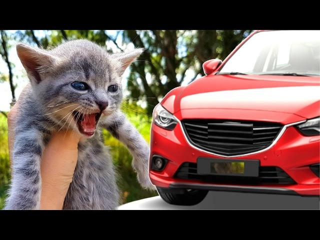 СПАСЛИ КОТЕНКА под колесами автомобиля! Спасение котенка ВИДЕО для детей